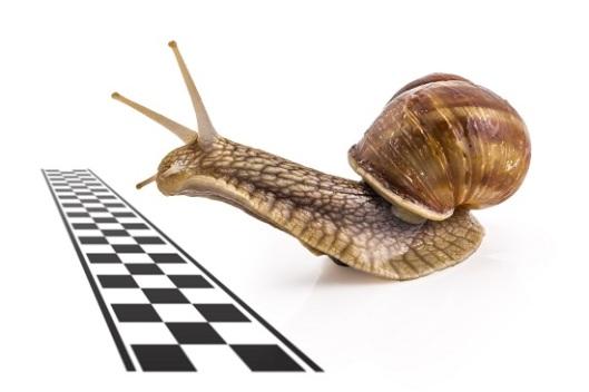 snail finish line 550 px