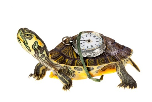 turtle 550 px
